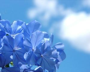 cvetia.jpg